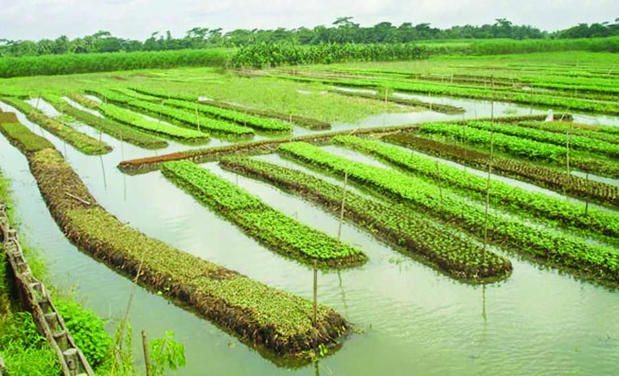 Bangladesh's floating gardens. The Asian Age,2015