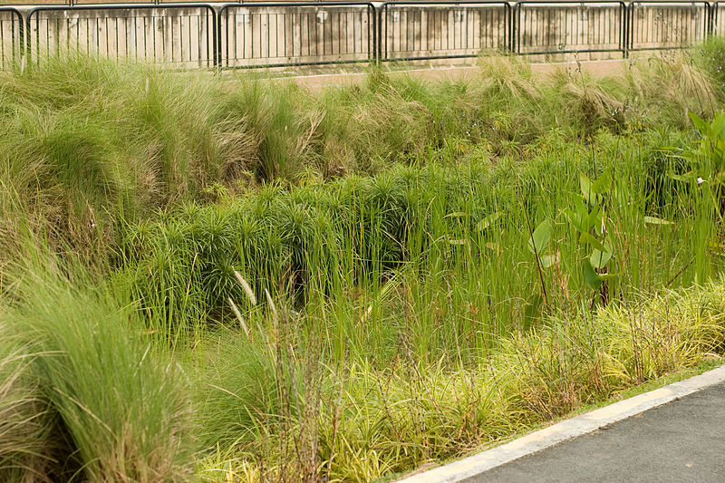 Balam Estate Rain Garden provide an effective stormwater management. Water from rain, passes through the rain garden, and the filtered water then flow into the stormwater drain.