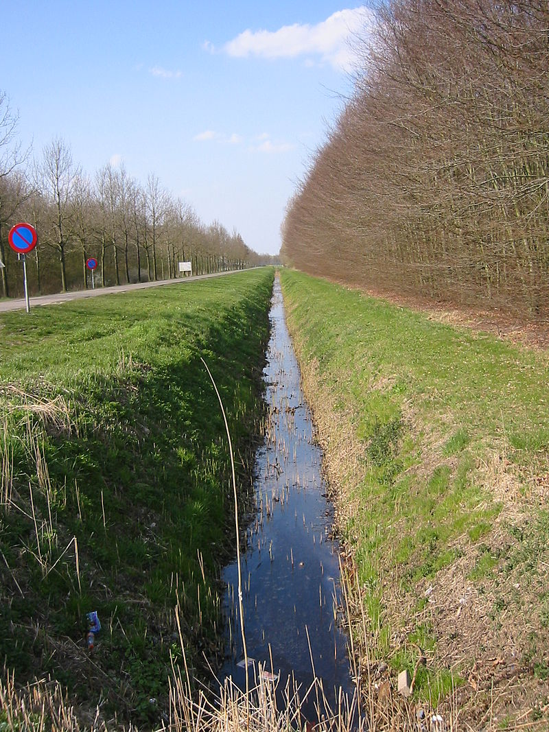 A well maintained ditch in the Netherlands