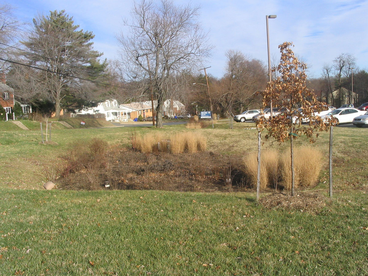 A bioretention cell, also called a rain garden in the United States