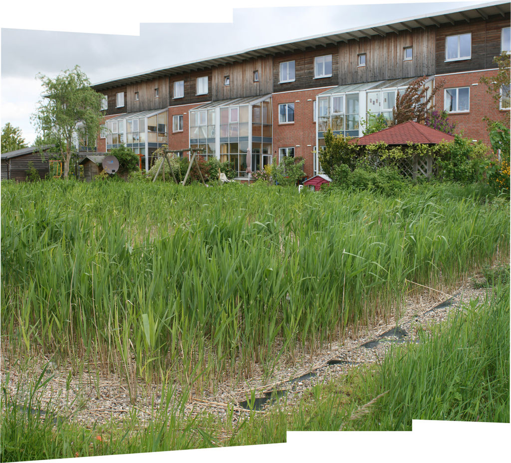Constructed wetland in an ecological settlement in Flintenbreite near Luebeck, Germany