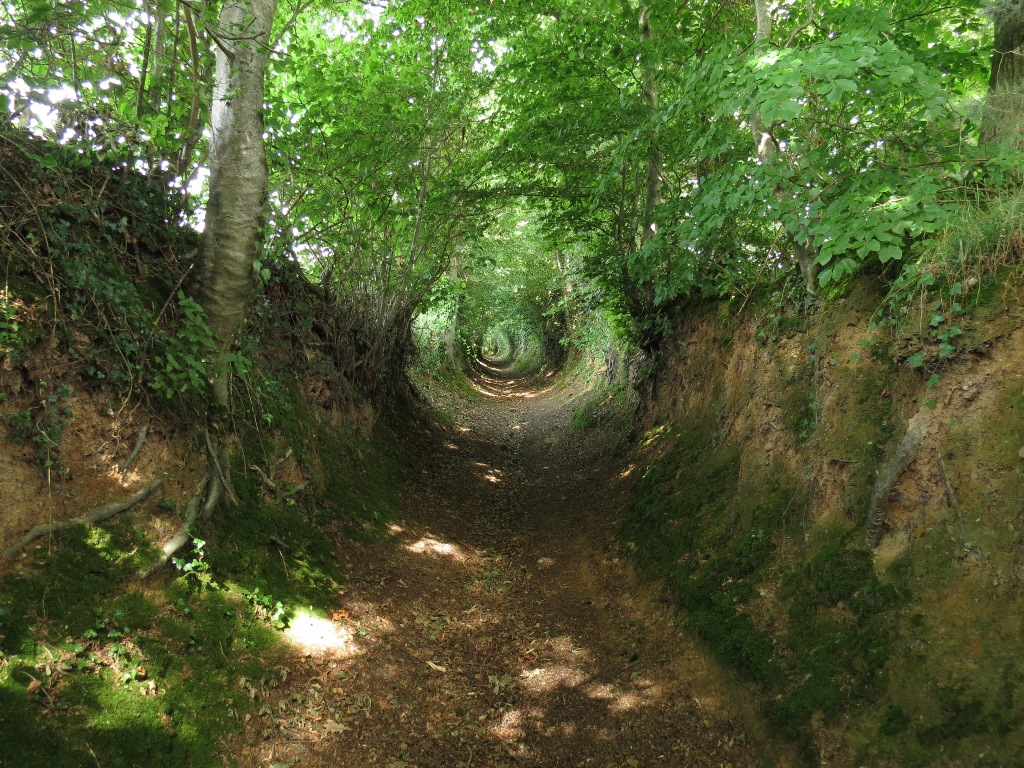 A hollow way (chemin creux) at La Meauffe, Manche, France