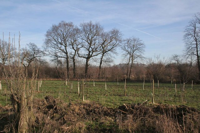 An afforestation project in Rand Wood, Lincolnshire, England