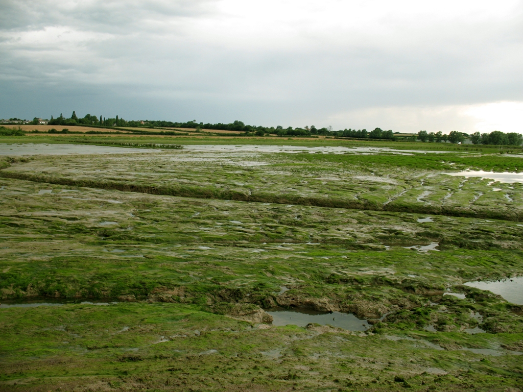 Tollesbury Managed Realignment site in Essex, the first large scale attempt at salt marsh restoration in the UK