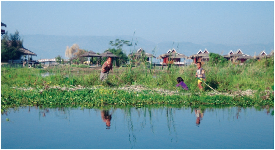 Floating agriculture at Lake Inle, Burma (Source: Courtesy of Wikimedia Commons)